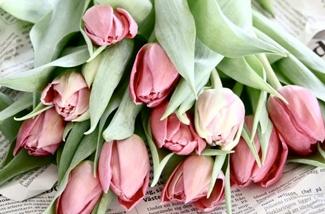 Tulpen in huis