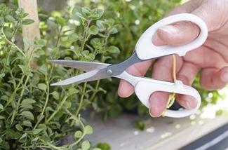 Binnenkijken interieur: Urban gardening