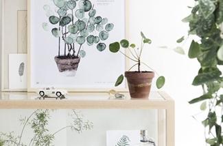 urban-planten-voor-je-huiskamer-kl.jpg