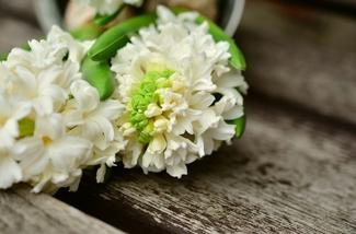 Voorjaarstuin vol bloemen