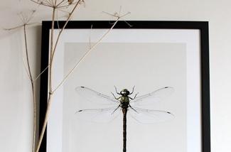 Blog: Vrijwillig mooie insecten in huis